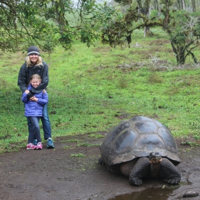 Tortoises, Boobies andSharks